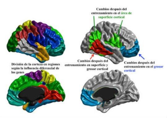 imagen entrenamiento cognitivo